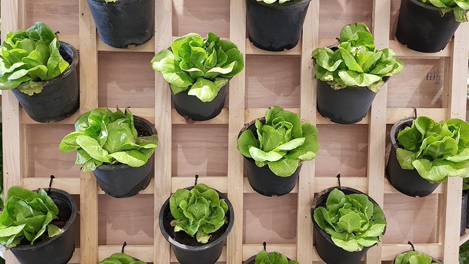 Create an Indoor Garden with Hanging Plants