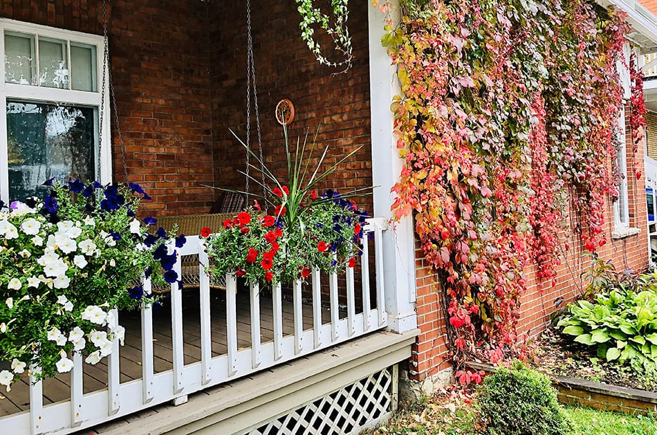 Railing and Flowers