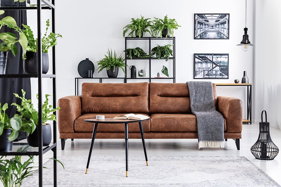 Surround the Leather Sofa with Plants