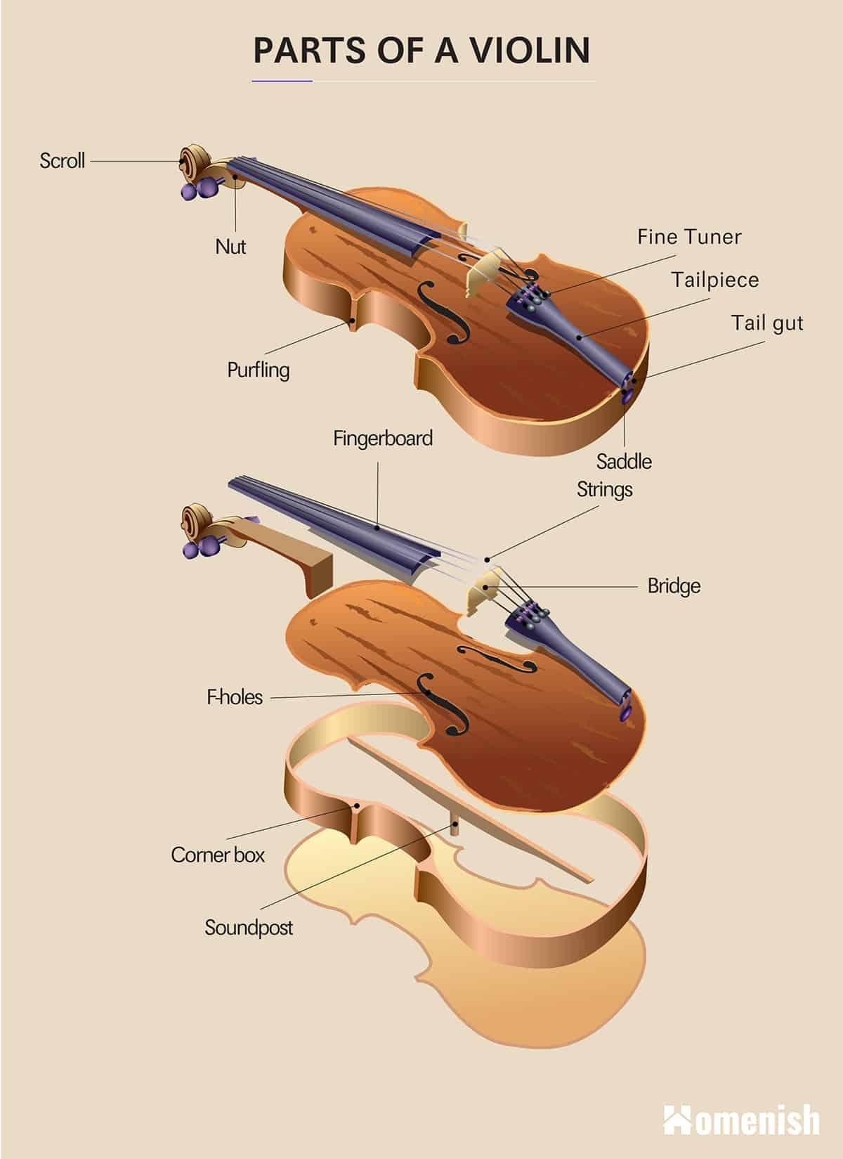 Parts of a Violin Diagram