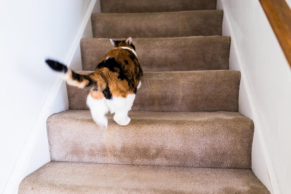 Pet Boundary