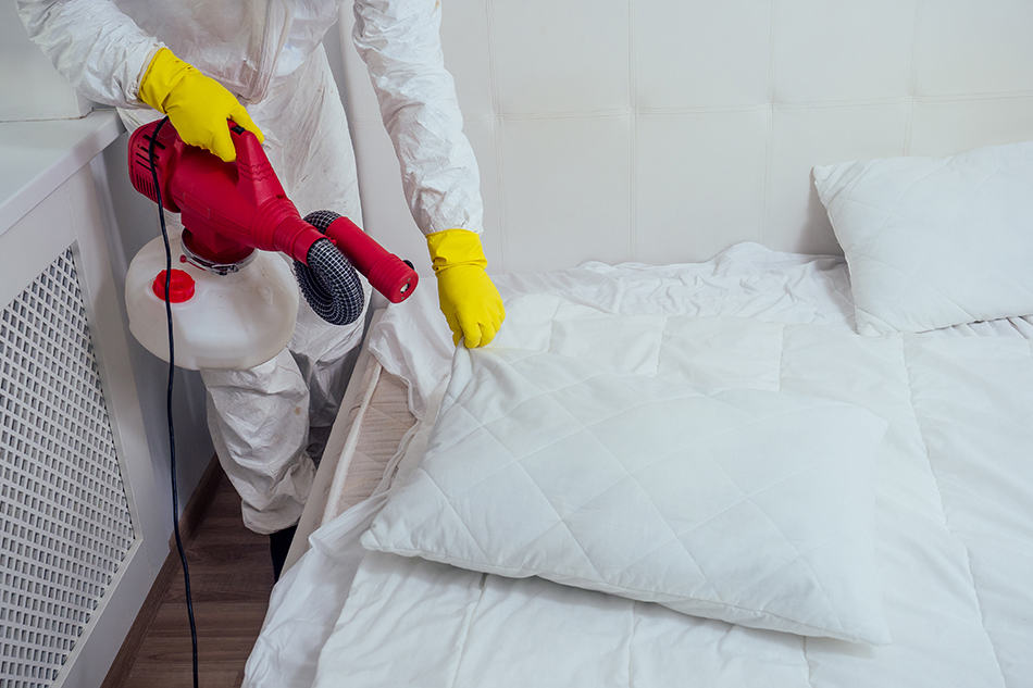 Use Chemical Insecticides