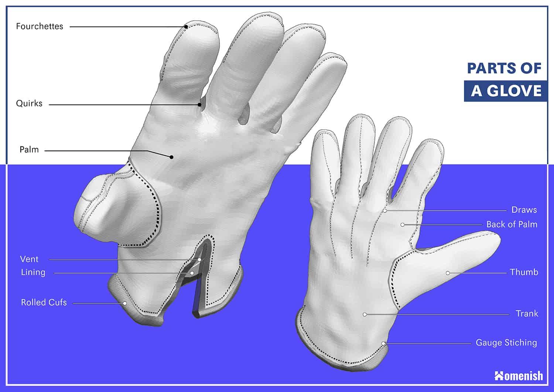 Parts of a Glove Diagram