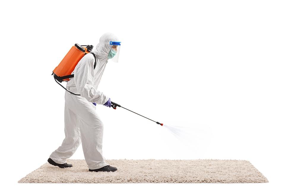 Call a Pest Control Service