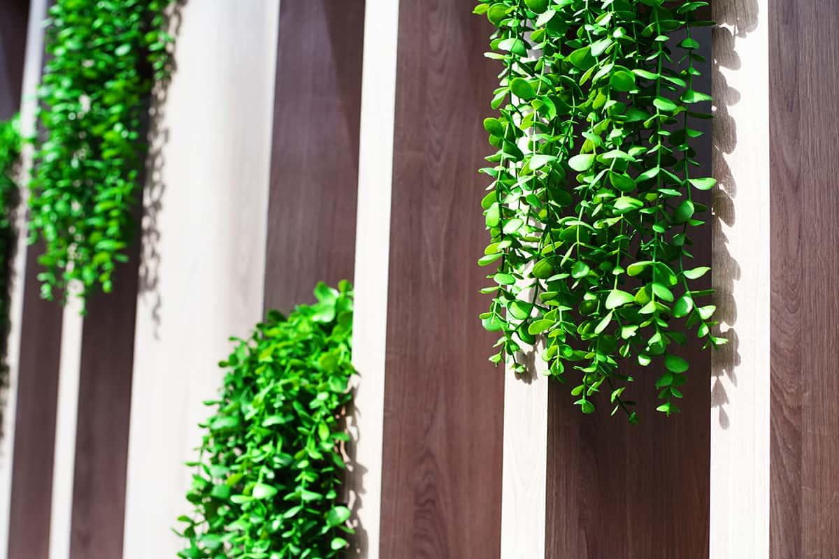 Plants on Column